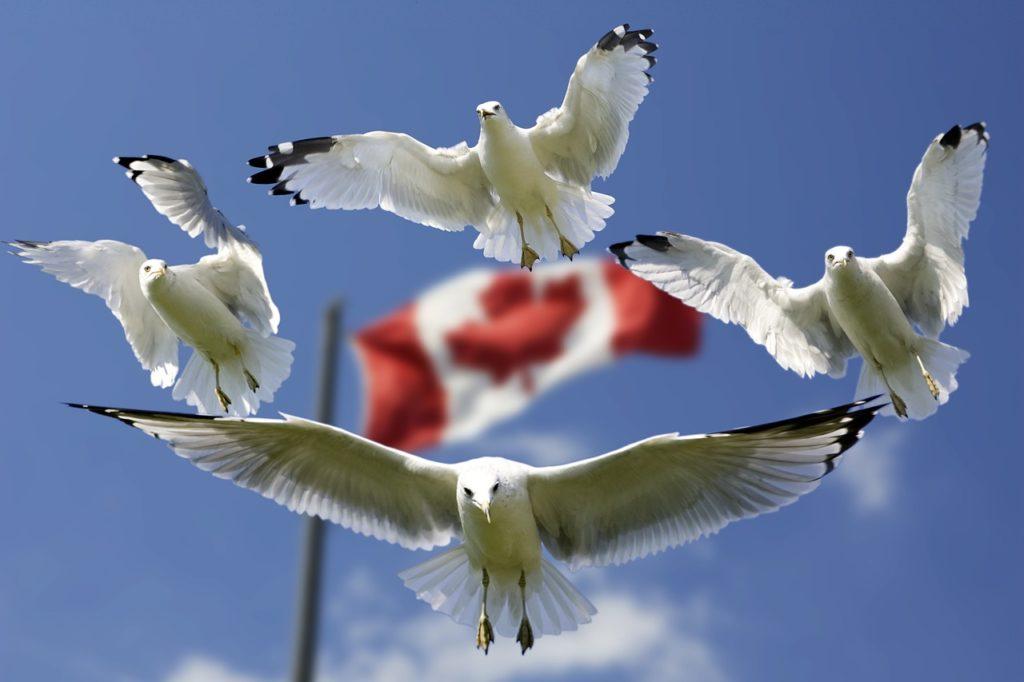 藍海國際教育顧問_短期遊學_推薦_加拿大